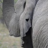 Stoppt das Elefantenreiten!