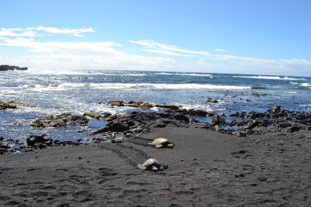 12black sand beach