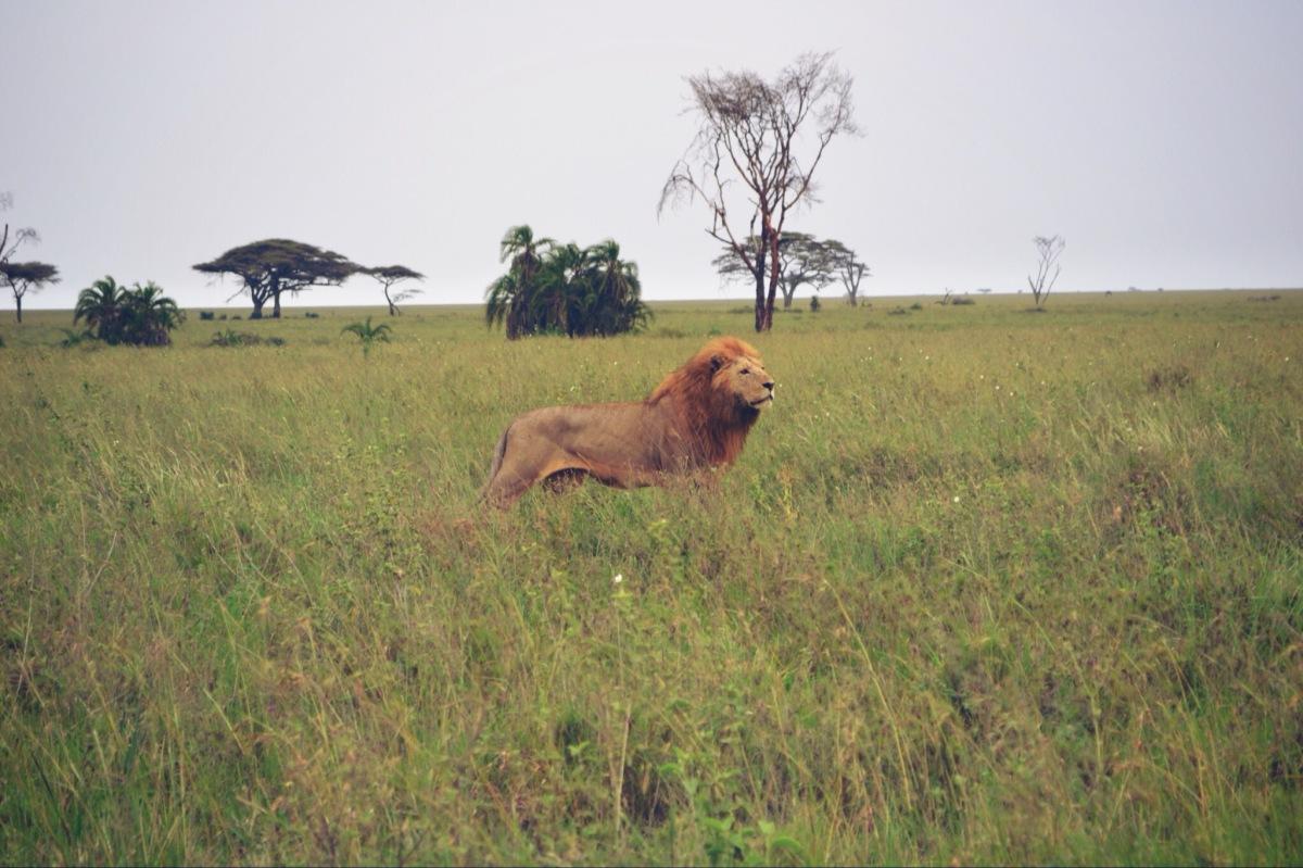 Roadtrip Tansania (Teil 8)